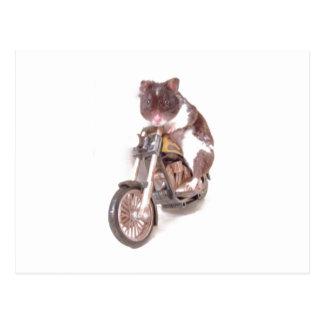 Motorcycle Hamster Postcard