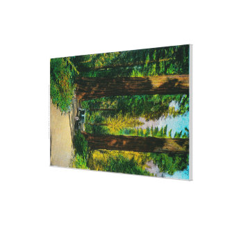 Motoring Through Giant Forest, Redwoods Gallery Wrap Canvas