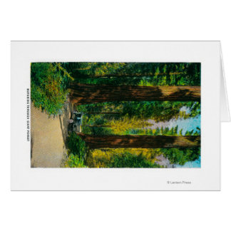 Motoring Through Giant Forest, Redwoods Cards