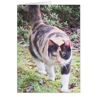 Mott, el gato, Notecard Tarjeta Pequeña