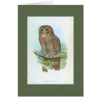 Mottled Wood Owl, restored antique Card