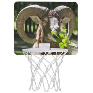 Mouflon Ram Mini Basketball Hoop