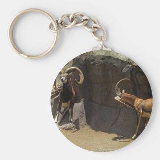 Mouflon Wild Sheep Scratching 1 Basic Round Button Keychain