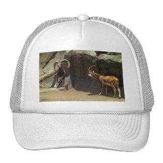 Mouflon Wild Sheep Scratching 1 Trucker Hat