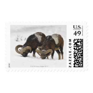 Mouflons in Winter, Germany Stamp