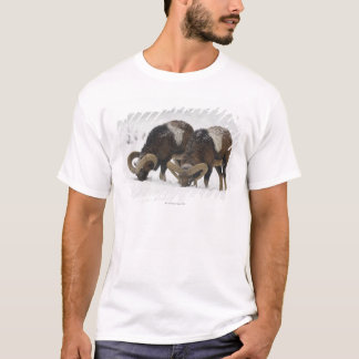 Mouflons in Winter, Germany T-Shirt