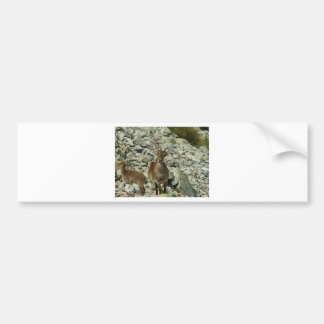 Mounain Goats In Castille Car Bumper Sticker