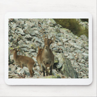Mounain Goats In Castille Mouse Pad