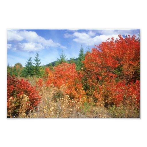 Mount Hood color Art Photo