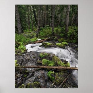 Mount Hood Stream Posters