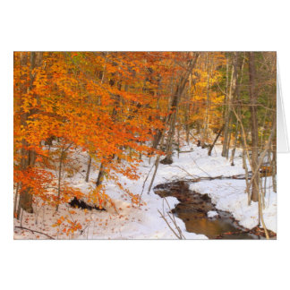 Mount Monadnock Forest Stream and Snow Foliage Card
