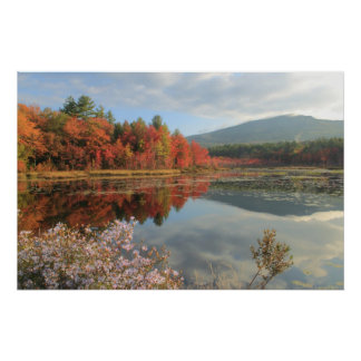 Mount Monadnock Perkins Pond Foliage and Asters Print