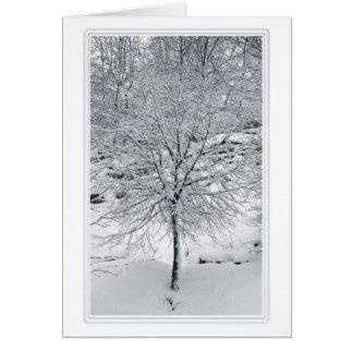 Mount Morris Park 1 Card