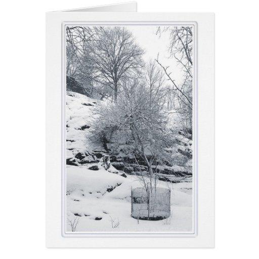 Mount Morris Park 3 Card