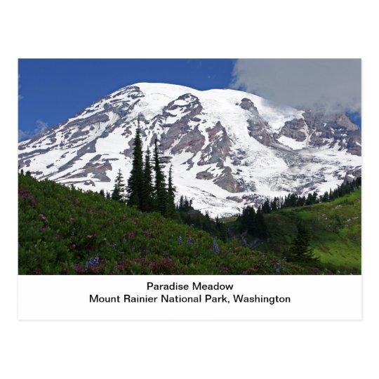 Mount Rainier Paradise Meadow Postcard