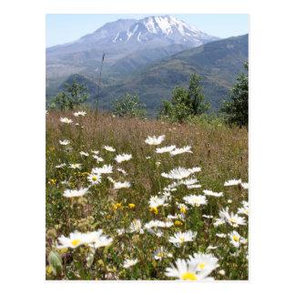 Mount St. Helens Postcard