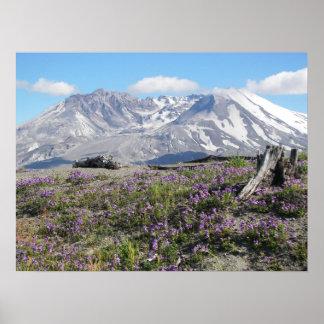 Mount St Helens Spring Landscape Poster