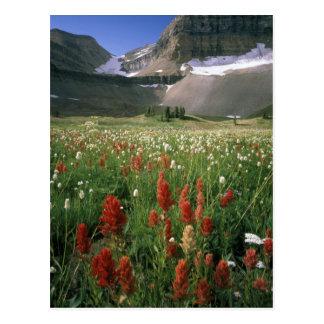 MOUNT TIMPANOGOS WILDERNESS, UT, US, POST CARD