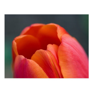 mount tulip postcard
