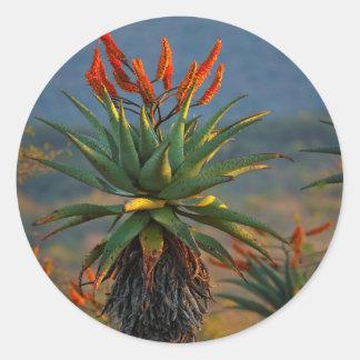 Mountain Aloe (Aloe Marlothii Berger) 2 Classic Round Sticker