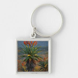 Mountain Aloe (Aloe Marlothii Berger) 2 Keychain