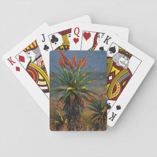 Mountain Aloe (Aloe Marlothii Berger) 2 Deck Of Cards