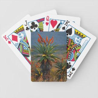 Mountain Aloe (Aloe Marlothii Berger) 2 Poker Cards
