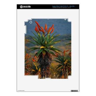 Mountain Aloe (Aloe Marlothii Berger) 2 iPad 3 Decal