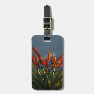 Mountain Aloe (Aloe Marlothii Berger) Bag Tag