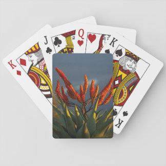 Mountain Aloe (Aloe Marlothii Berger) Playing Cards