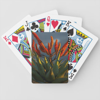 Mountain Aloe (Aloe Marlothii Berger) Card Decks