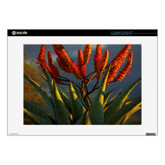 "Mountain Aloe (Aloe Marlothii Berger) 15"" Laptop Decal"