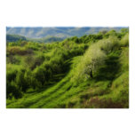 Mountain Apple Orchard Poster