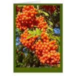 Mountain Ash Berries Card