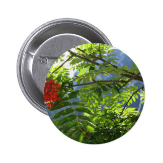 Mountain ash Sorbus Bush with red berries Button