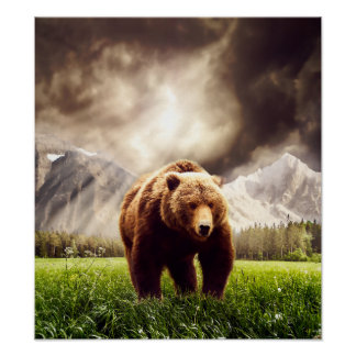 Mountain Bear Poster