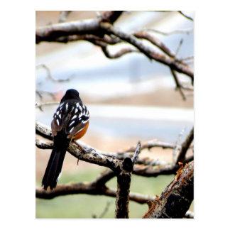 Mountain Bird Postcard