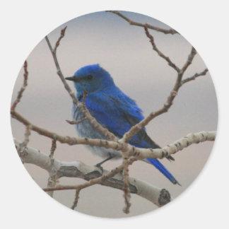 Mountain Blue Bird Classic Round Sticker