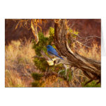 Mountain Bluebird at Arches National Park Card