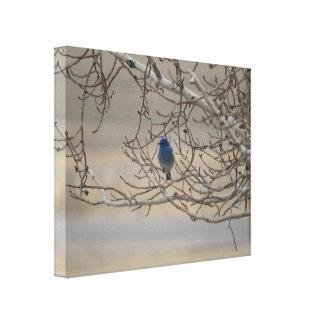 Mountain Bluebird Canvas Print