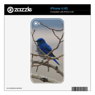 Mountain Bluebird iPhone 4 Skins