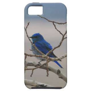 Mountain Bluebird iPhone SE/5/5s Case