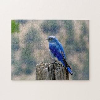 Mountain Bluebird Jigsaw Puzzle