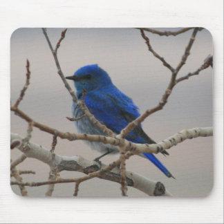 Mountain Bluebird Mouse Pad
