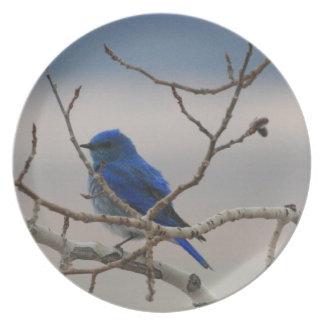 Mountain Bluebird Dinner Plates