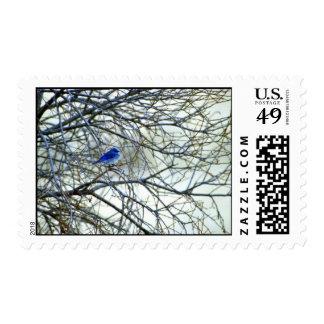 Mountain Bluebird Postage Stamps