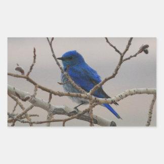 Mountain Bluebird Rectangular Sticker
