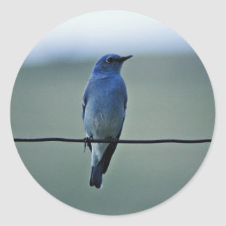 Mountain Bluebird Round Stickers