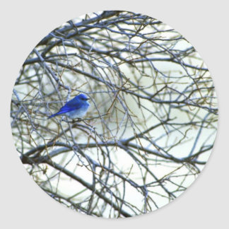 Mountain Bluebird Stickers