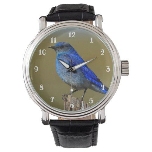 Mountain Bluebird Watch